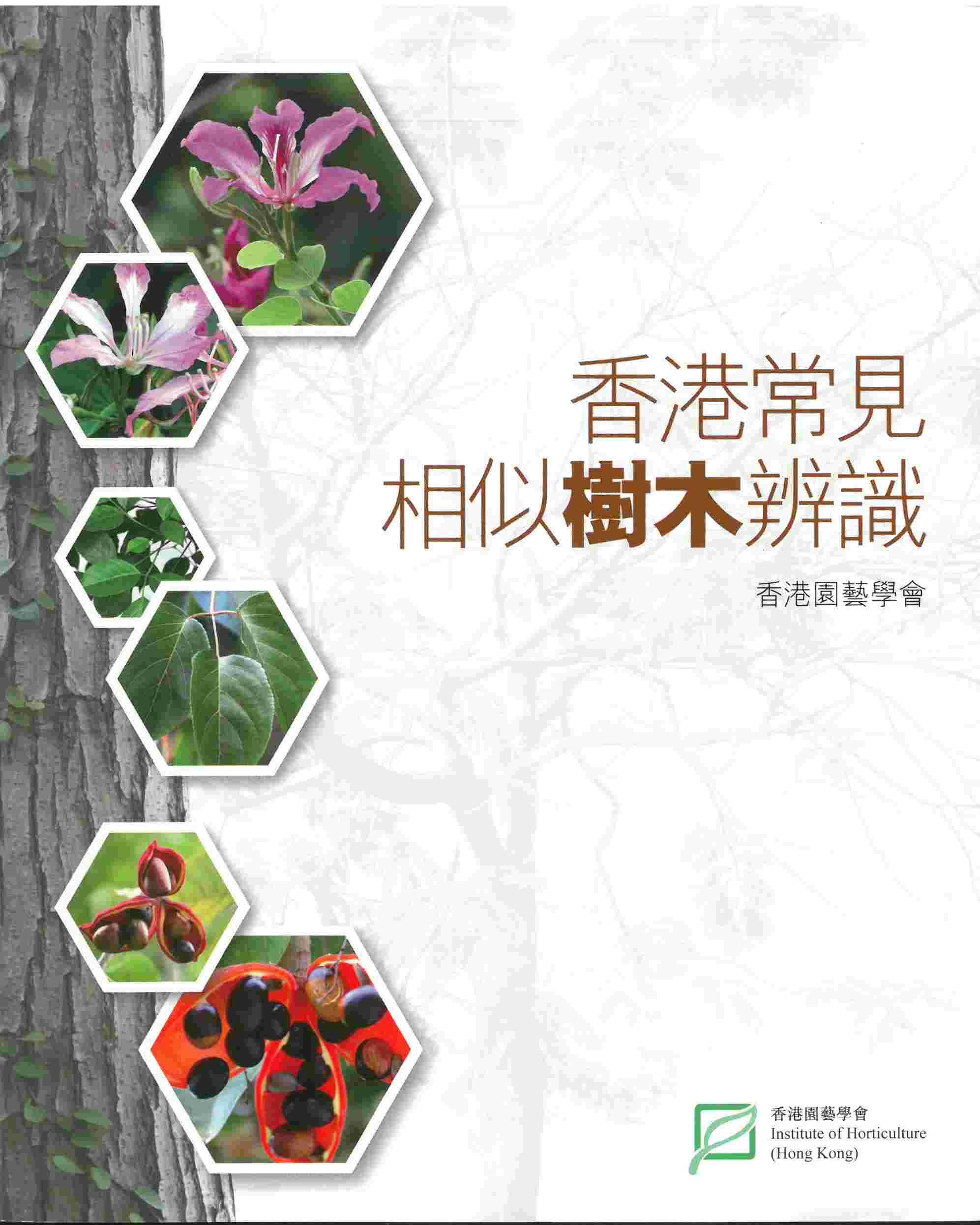 香港常見相似樹木辨識